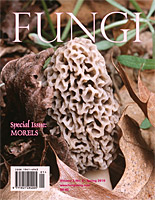 Fungi Magazine Special Issue Morels